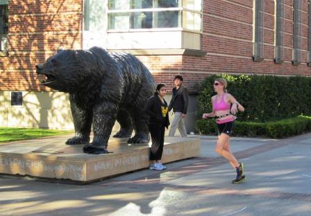 Tri run bear