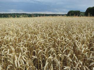 Fields by my house